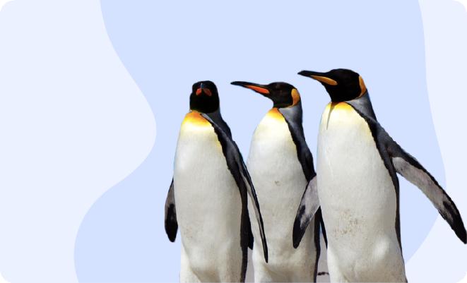 Penguins at the Calgary Zoo